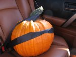 pumpkin secure.jpg
